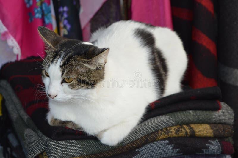 Het grijze en witte kat leggen royalty-vrije stock fotografie