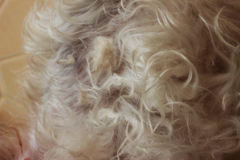 Het grijze haar van een hond is verward op een hond stock foto's