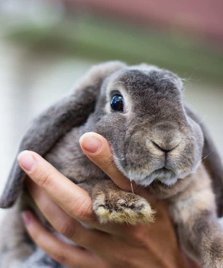 Het grijze huis een konijn royalty-vrije stock foto