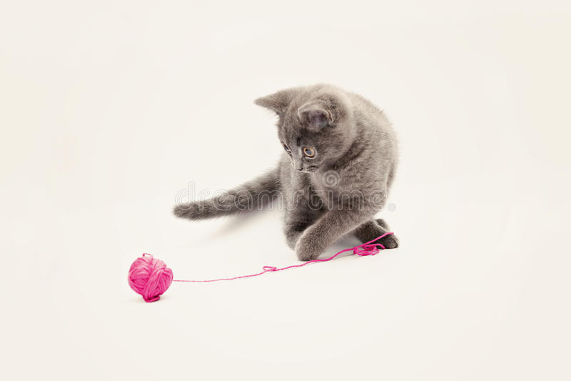 Het grijze katje spelen met roze geïsoleerd clew stock fotografie