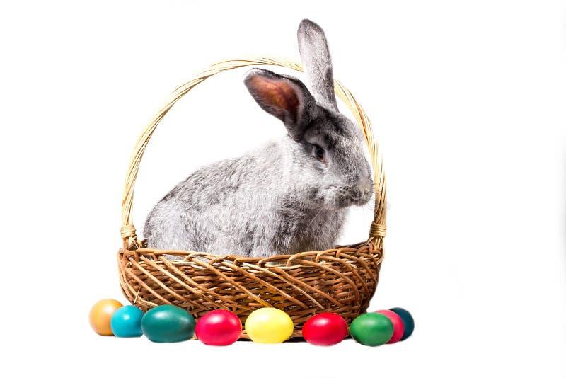 Het grijze Pasen-konijntje in een mand met eieren, isoleert royalty-vrije stock afbeelding