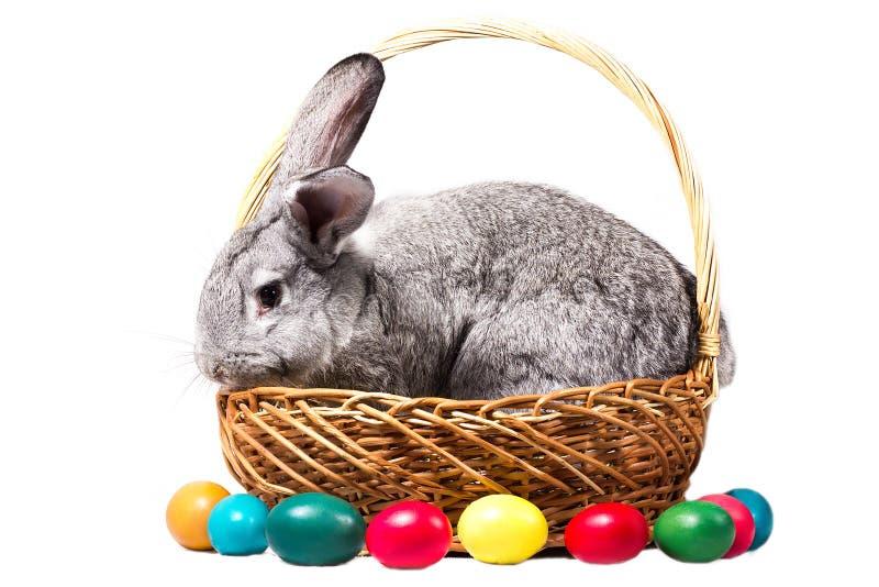 Het grijze Pasen-konijntje in een mand met eieren, isoleert stock afbeeldingen
