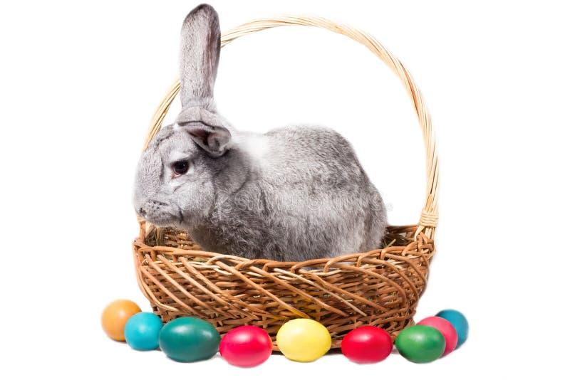 Het grijze Pasen-konijntje in een mand met eieren, isoleert stock foto's