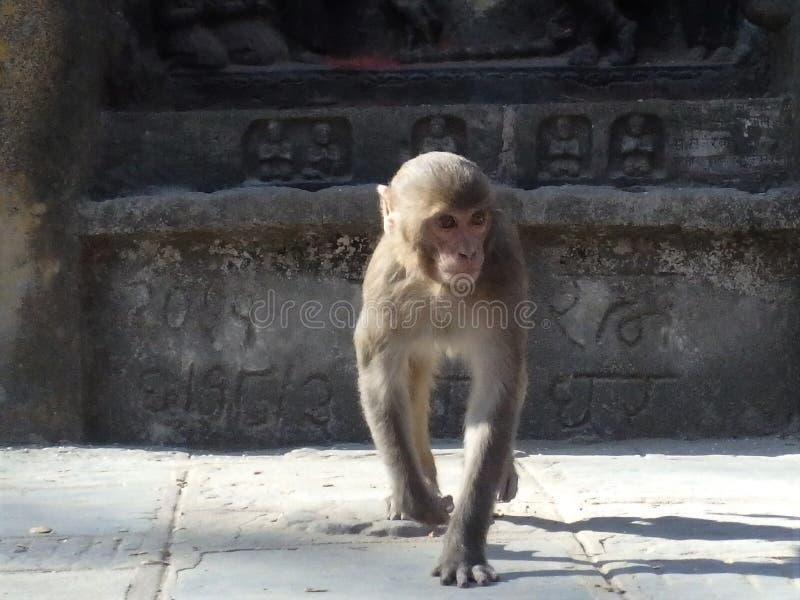 Het groeien met Boeddhistisch royalty-vrije stock afbeeldingen