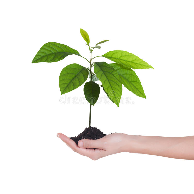 Het groeien van de boom in grond royalty-vrije stock foto