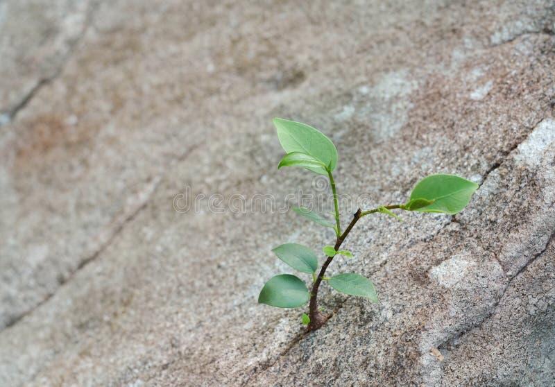 Het groeien van het jong boompje stock afbeelding