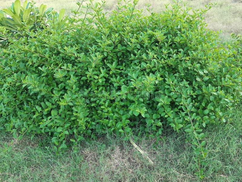 Het groen met wildernis wordt versierd die doorbladert stock afbeelding
