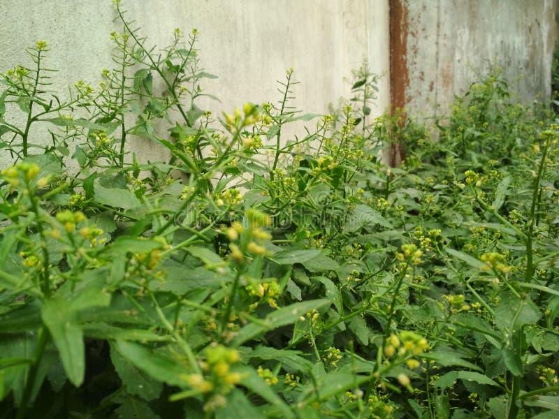 het groene aard wilde zachte verfrissen zich stock foto