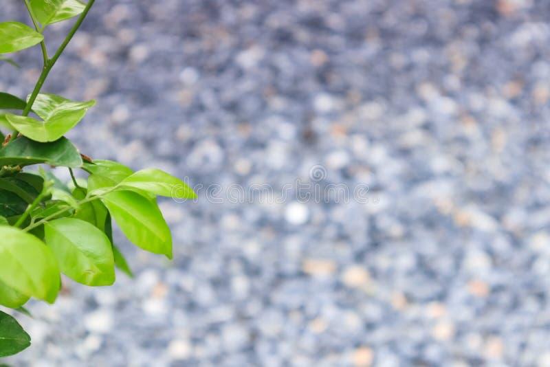 Het groene blad met vage rotsachtergrond met copyspace voor geeft en tekst en achtergrond uit royalty-vrije stock foto