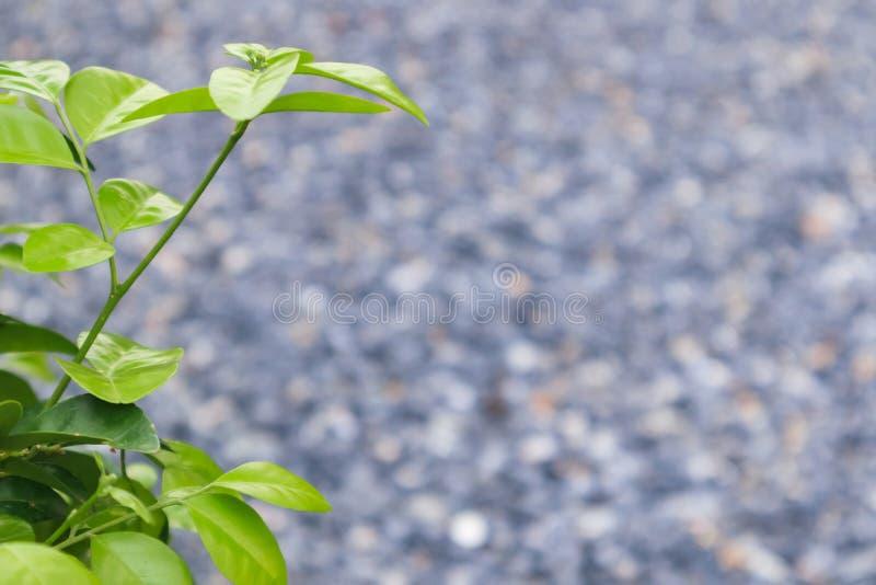 Het groene blad met vage rotsachtergrond met copyspace voor geeft en tekst en achtergrond uit royalty-vrije stock afbeelding