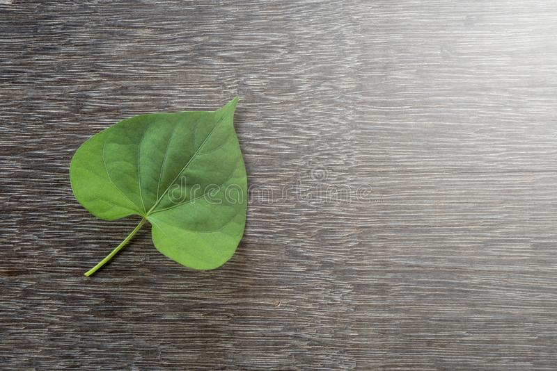 Het groene blad van de hartvorm stock foto's