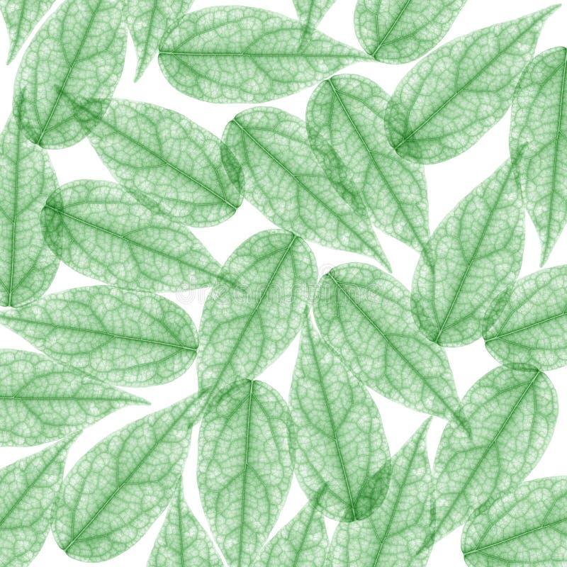 Het groene Blad van het Skelet voor achtergrond. Röntgenstraal royalty-vrije stock fotografie