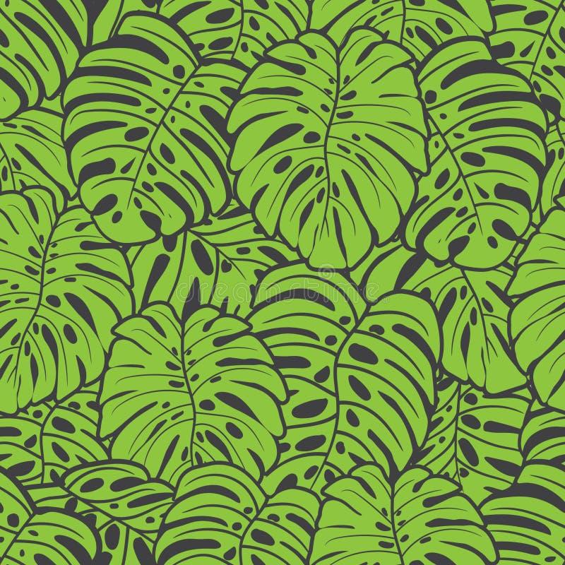 Het groene blad van monsteradeliciousa royalty-vrije stock fotografie
