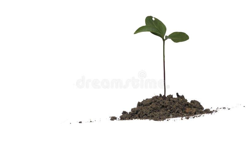 Het groene die groeien van hoop van grond op witte achtergrond wordt geïsoleerd stock foto