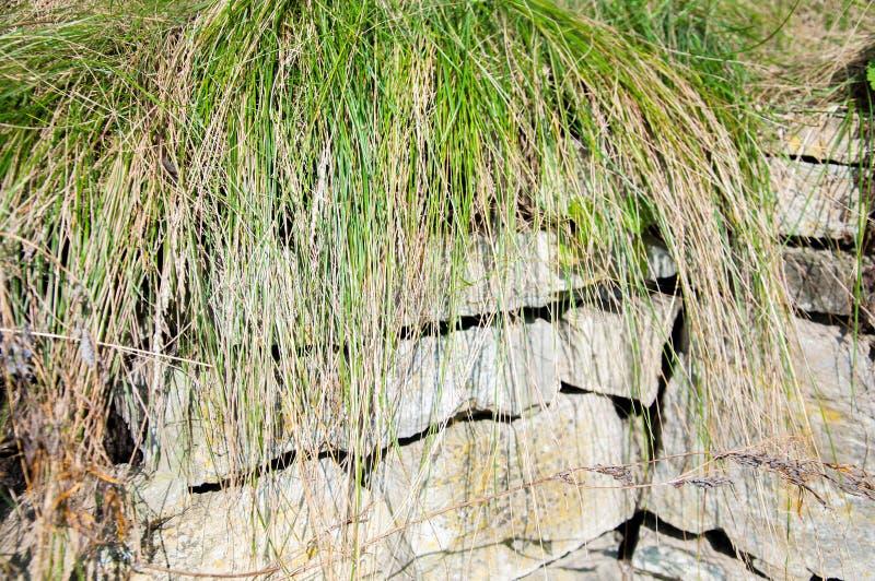 Het groene dunne gras groeide op stenen Steenomheining stock foto's