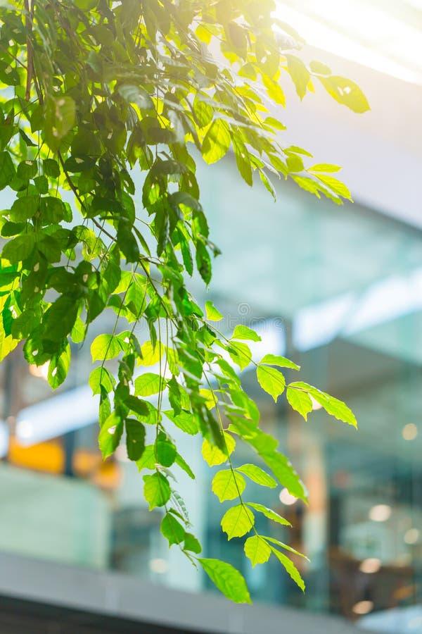 Het groene eco binnenland van het de bouwbureau met installatieboom royalty-vrije stock afbeelding