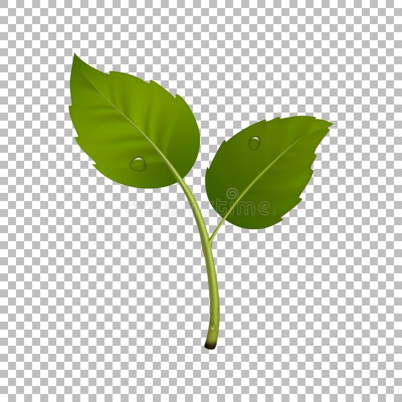 Het groene element van het spruitontwerp Vectorillustratie met bladpaar en dalingen van dauw Ecologieconcept, realistisch pictogr royalty-vrije illustratie