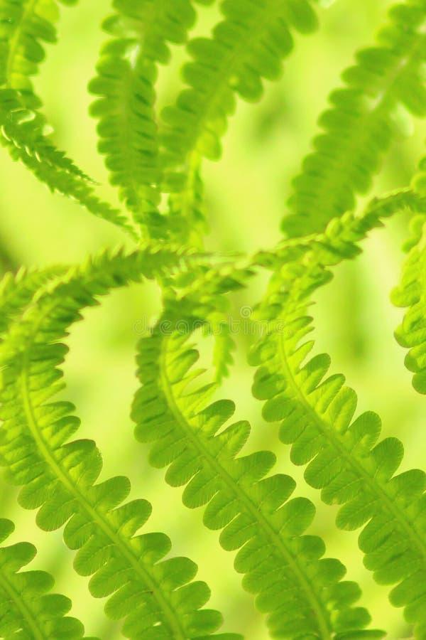 Het groene formaat van het het patroon dichte omhooggaande landschap van het varenblad stock fotografie