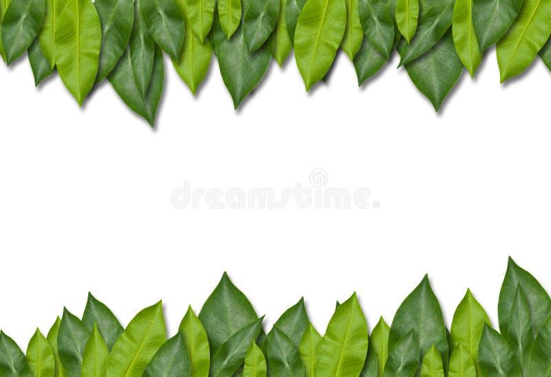 Het groene Frame van het Blad stock fotografie