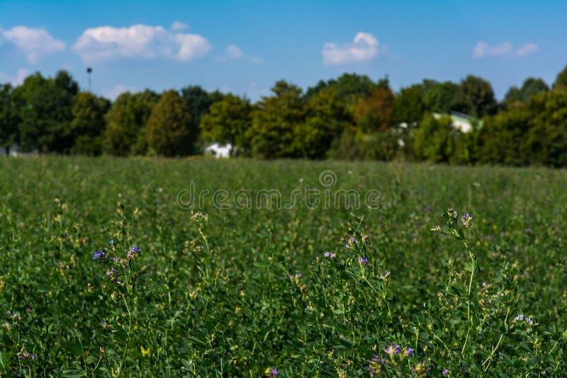 Het groene Gebied bloeit in openlucht het Landschap van de Parkuitgestrektheid royalty-vrije stock afbeelding