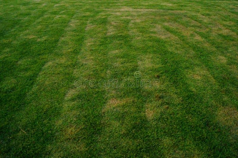 Het groene gebied van de gazonvoetbal, op school stock afbeelding