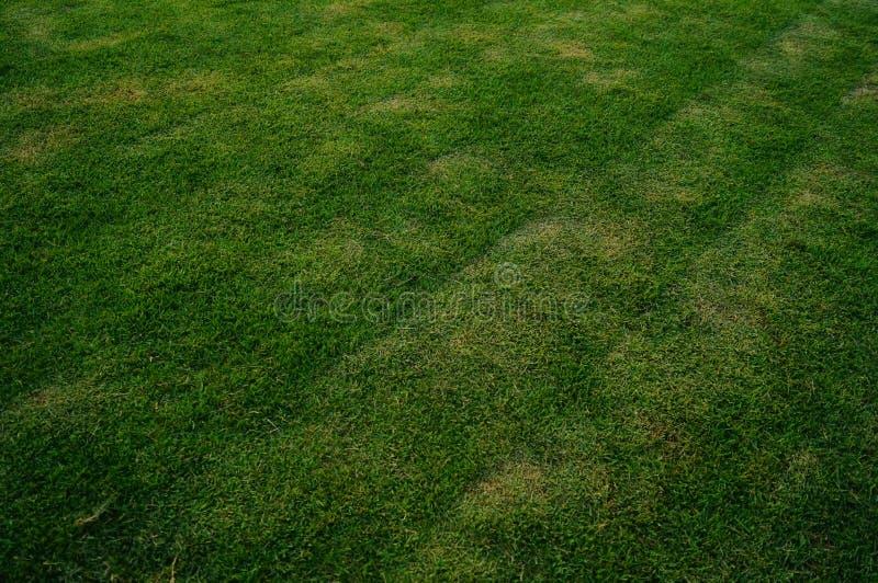 Het groene gebied van de gazonvoetbal, op school stock fotografie