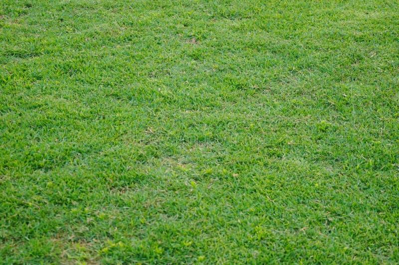 Het groene gebied van de gazonvoetbal, op school royalty-vrije stock afbeelding