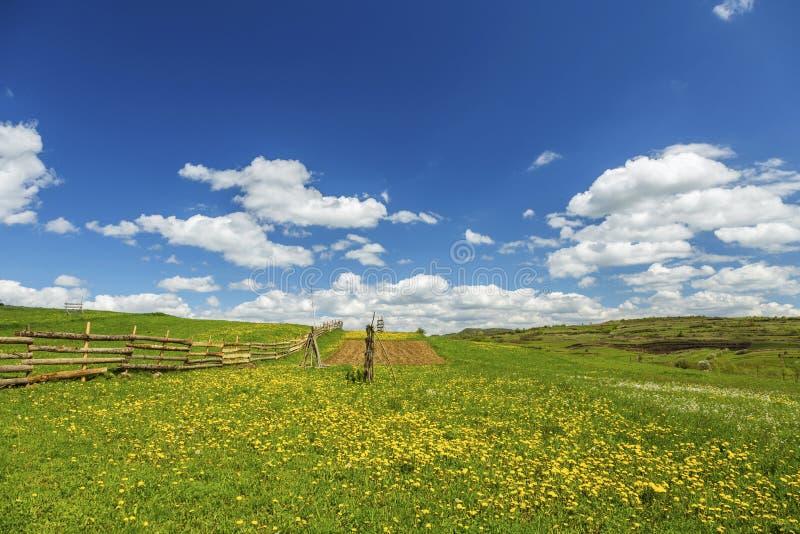 Download Het Groene Gebied Van Het Landschap Met Paardebloem Stock Foto - Afbeelding bestaande uit achtergrond, madeliefje: 54075414