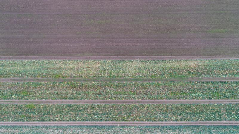 Het groene gebied van het land met rijlijnen, hoogste mening, luchtfoto stock foto's