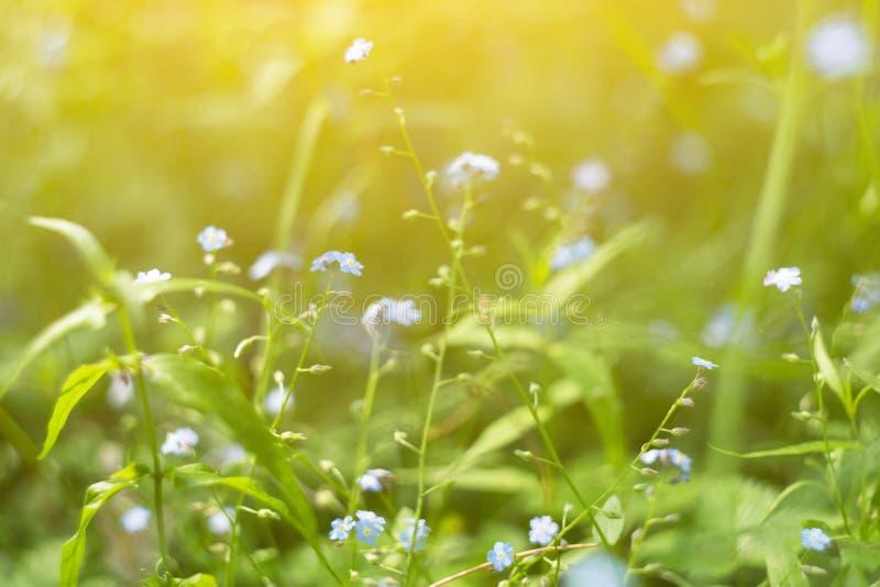 Het groene gras, de installaties en de bloemen op weide sluiten omhoog, macro in zonlicht Samenvatting vage aardachtergrond royalty-vrije stock foto's