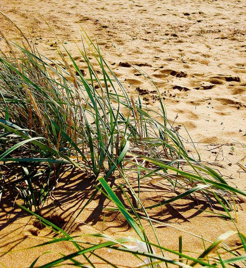 Het groene gras op een achtergrond van zand, mening van zandig strand en duin met kruid, stileerde het schilderen stock afbeeldingen