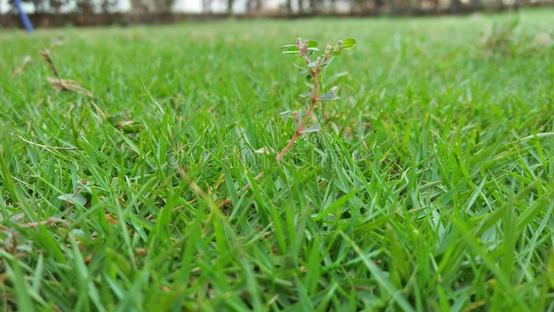 Het groene gras is volledig van vreugde stock fotografie