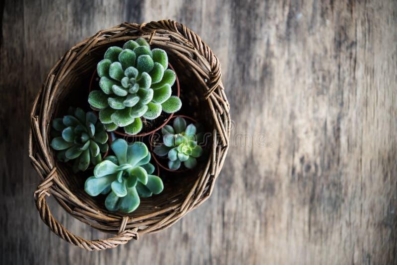 Het groene huis plant ingemaakt, succulents in een mand royalty-vrije stock afbeelding