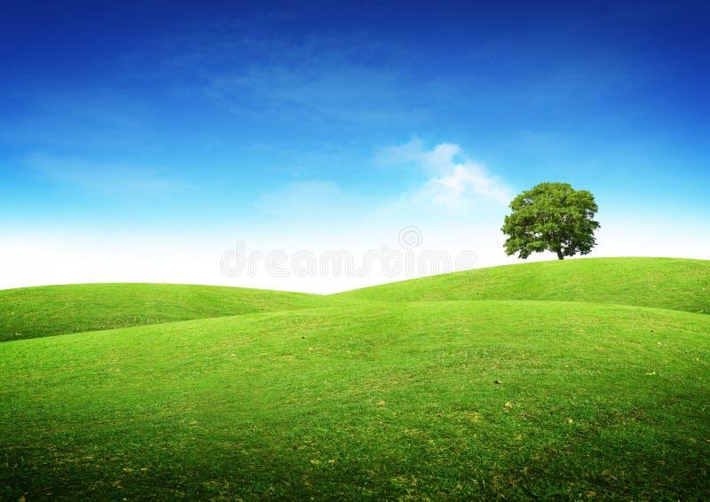 Het groene Landschap van de Zomer stock fotografie