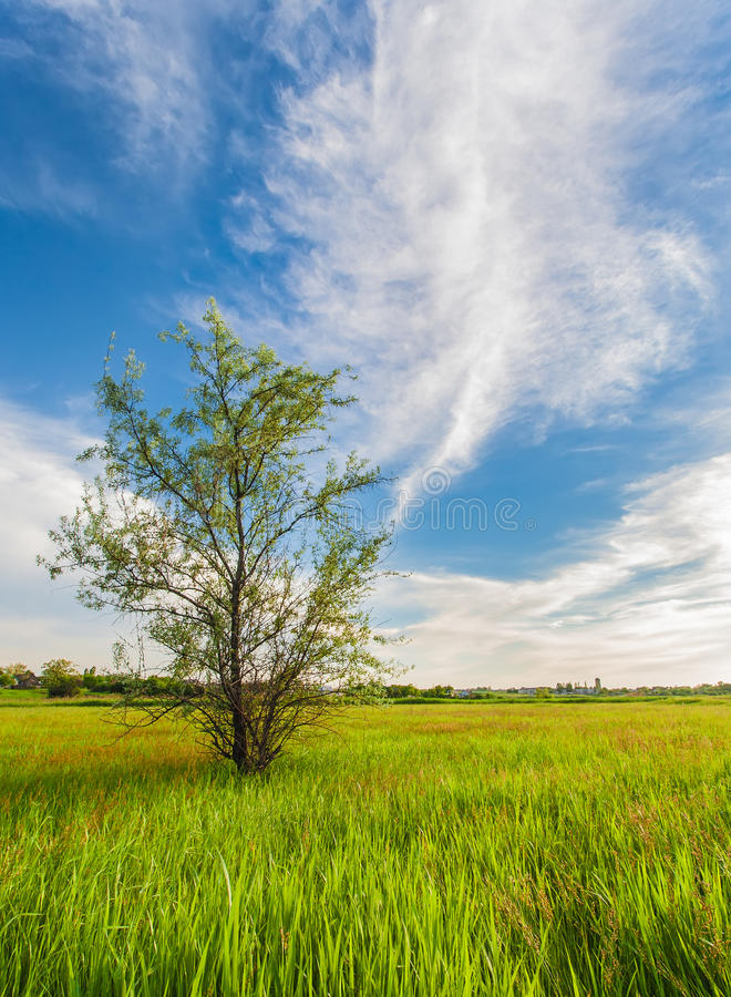 Download Het Groene Landschap Van Het Gebied Van Het Gras Stock Afbeelding - Afbeelding bestaande uit weide, vreedzaam: 29509673