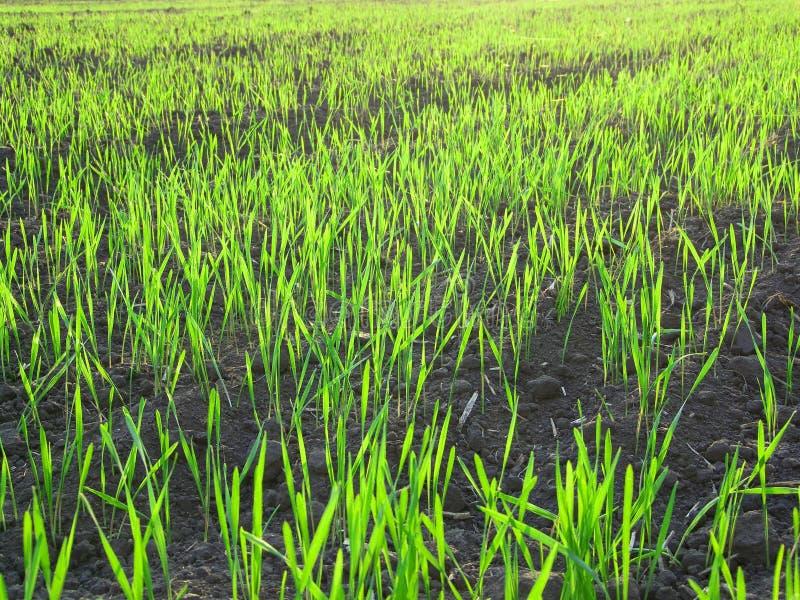 Het groene landschap van het gras royalty-vrije stock afbeeldingen