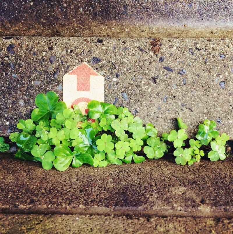 Het groene Leven stock foto's
