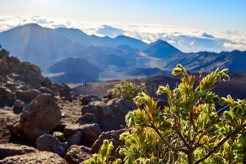 Het groene leven op de berg van HaleakalÄ  tijdens zonsopgang royalty-vrije stock afbeeldingen