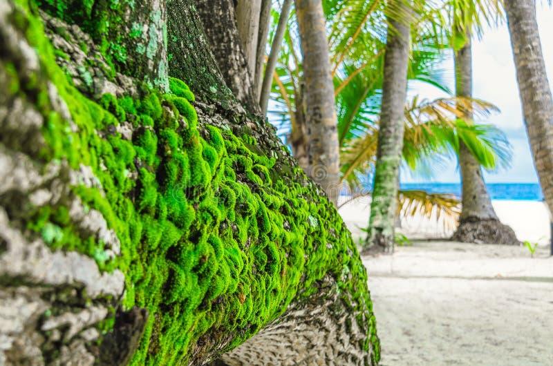 Het groene mos groeien op de schors van een boom op verlaten islan royalty-vrije stock afbeeldingen