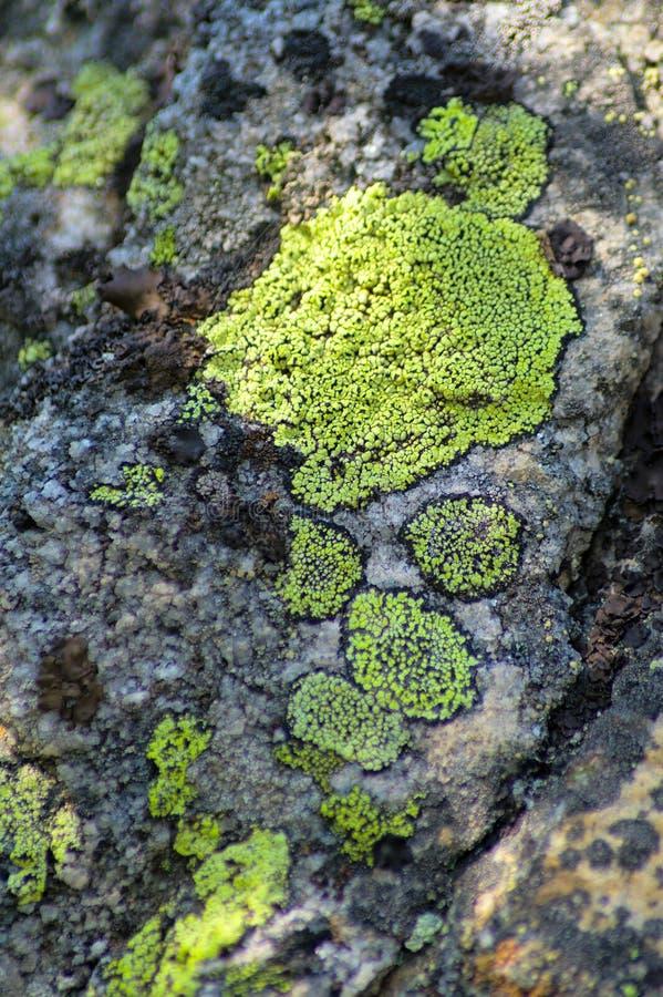 Het groene mos groeit op een rots Verticaal kader royalty-vrije stock foto