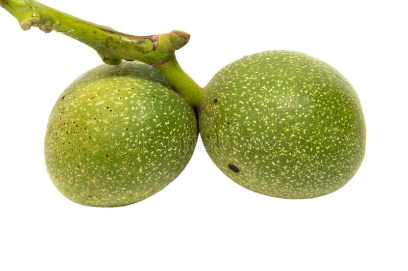 Het groene okkernoot yaoung vruchten rijpen op de boom met bladeren, royalty-vrije stock fotografie