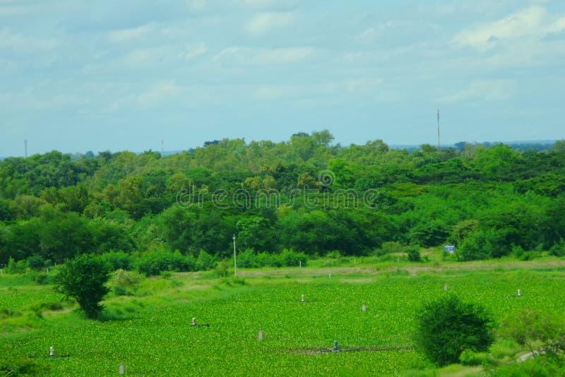 Het groene park in de stad Thailand van Khon Kaen royalty-vrije stock afbeelding