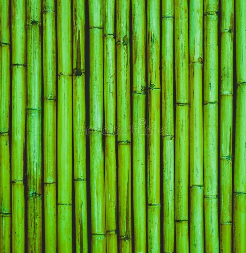 Het groene patroon bamboe van de achtergrondboominstallatie stock foto