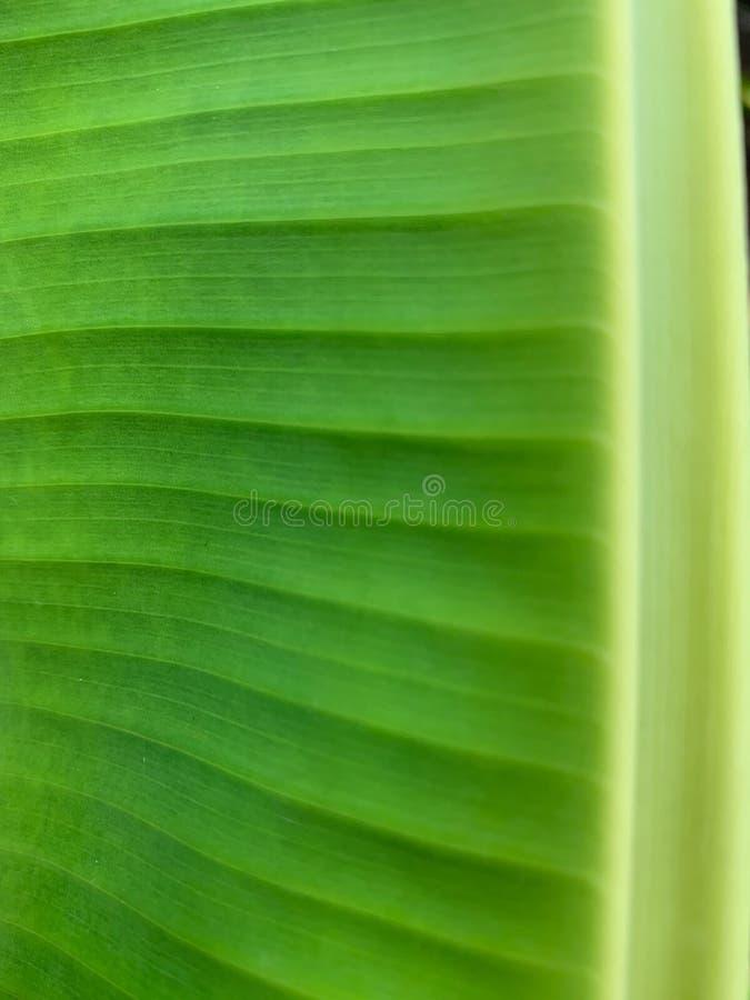 Het groene patroon van het Banaanblad, verloftextuur royalty-vrije stock afbeeldingen