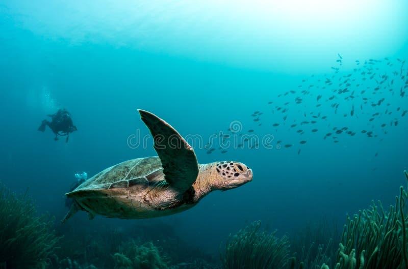 Het groene schildpad zwemmen royalty-vrije stock afbeeldingen