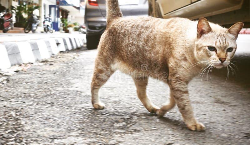 Het grote bruine kat ontspannen in de straat Kat die in straat op zonnige dag rusten, ernstige kat die recht aan de camera kijken royalty-vrije stock foto