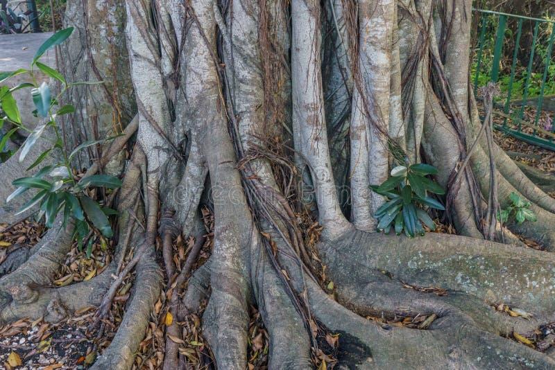 Het grote detail van boomwortels royalty-vrije stock foto's