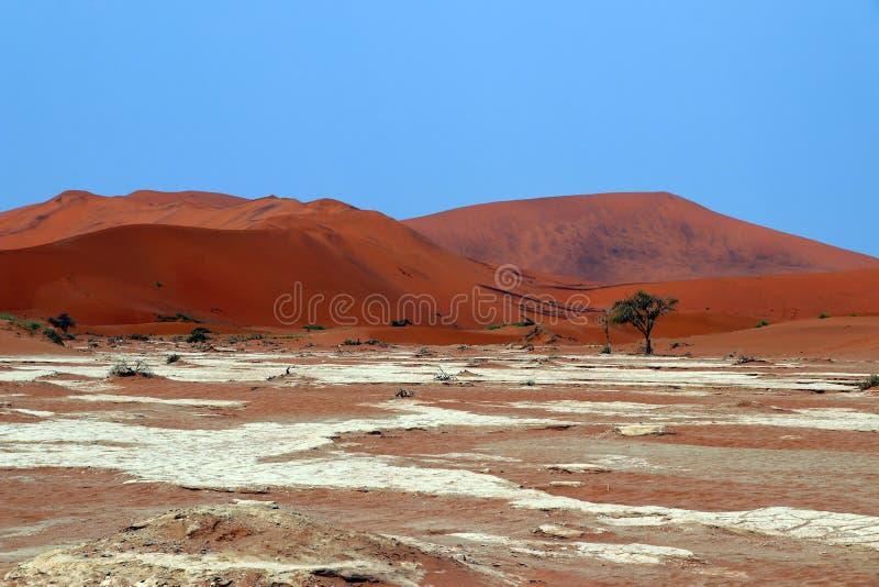 Het grote duin van het Papazand Sossusvlei - Namibië Afrika royalty-vrije stock foto's
