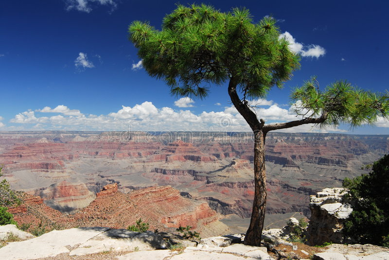 Het grote gezichtspunt van de Canion en jeneverbessenboom stock foto