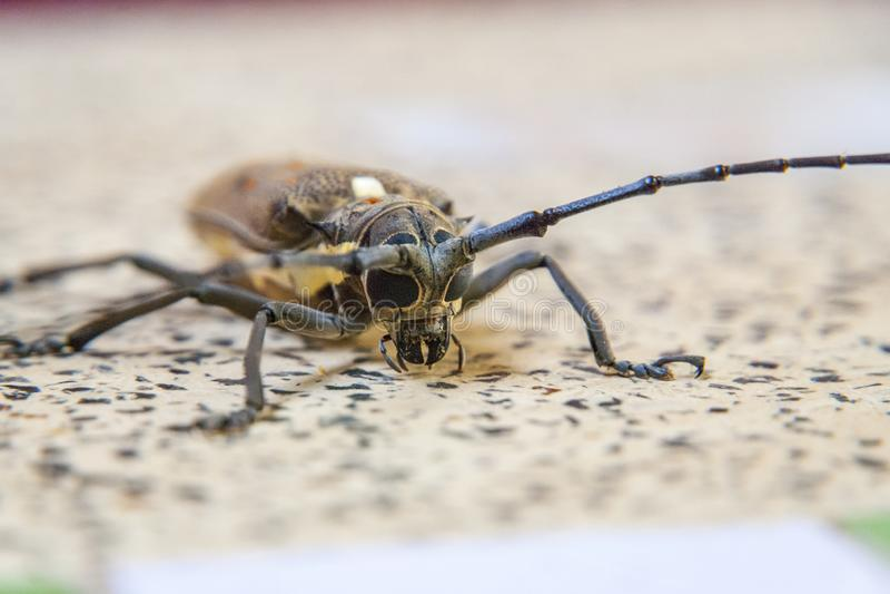 Het grote insect op een lijst, sluit omhoog royalty-vrije stock afbeeldingen